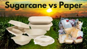 Sugarcane packaging vs paper